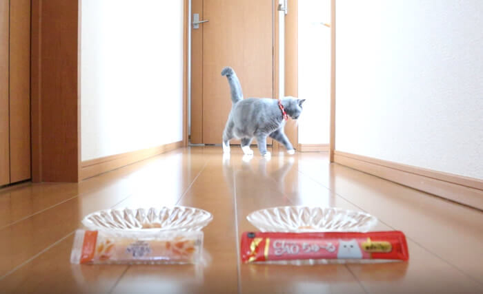 猫のおやつ比較失敗