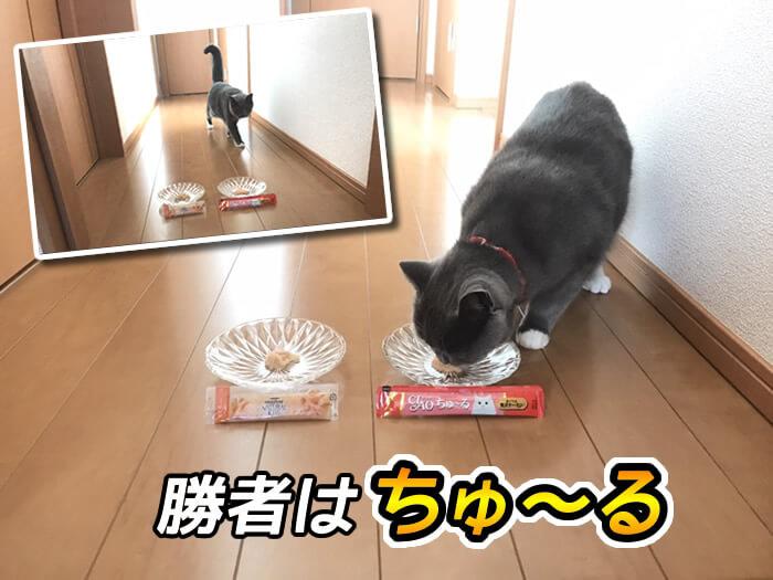 猫おやつ比較対決はちゅーるの勝ち