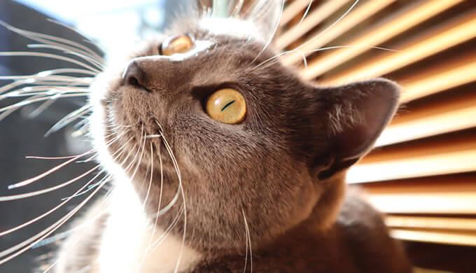 日向ぼっこする猫