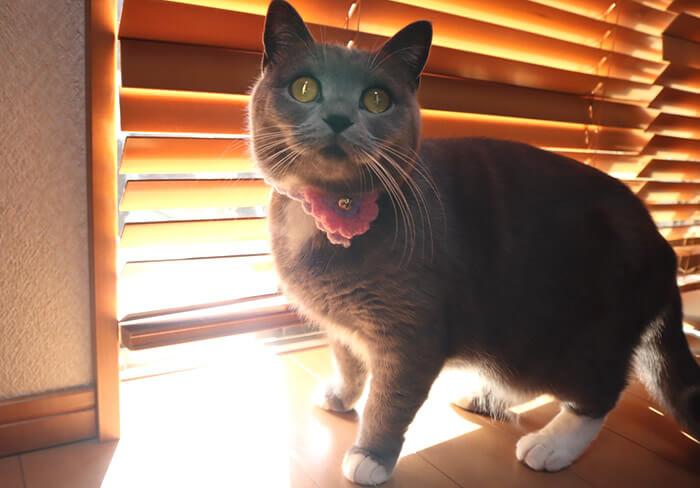 逆光から何かを訴える猫