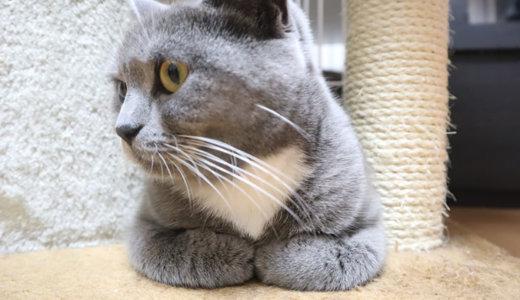 猫の香箱座りに指をつっこんでみたい