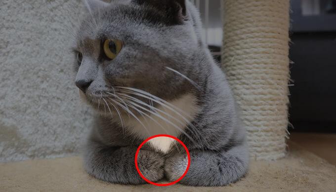 香箱座りする猫の中に指を入れる