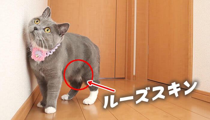 ルーズスキン猫のお腹