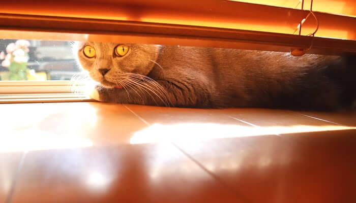 飼い主をニャルソックする猫