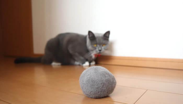 自分の毛玉ボールを見つめる猫