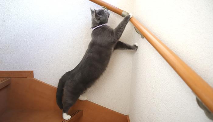 窓の外が気になって伸びる猫