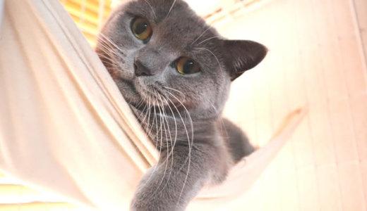 ハンモックから垂れる靴下猫の手が最高に可愛い…