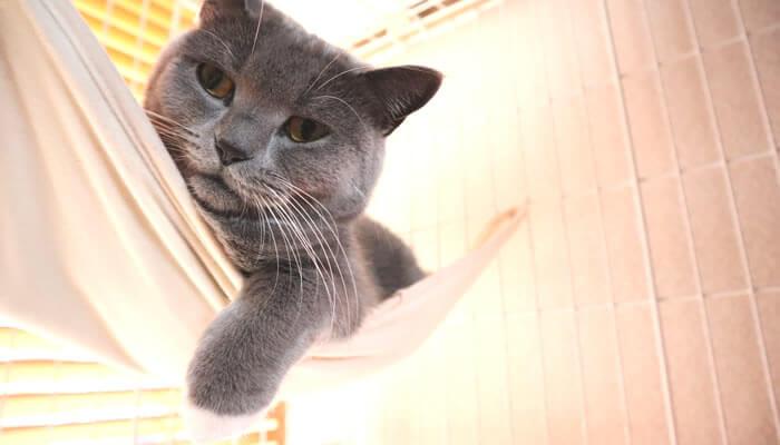 ハンモックから手を垂らす靴下猫