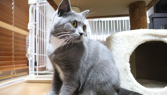 カーペットを見つめる猫