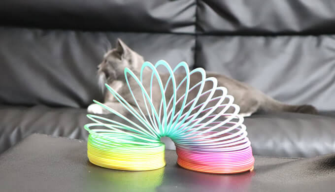 レインボースプリングが苦手な猫
