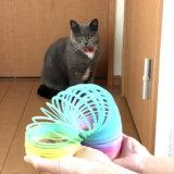 猫とカラフルスプリング