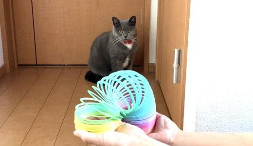 おもちゃ「レインボースプリング」は猫の体調を悪くする!?