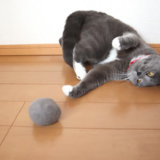 自分の毛玉ボールで遊ぶ猫