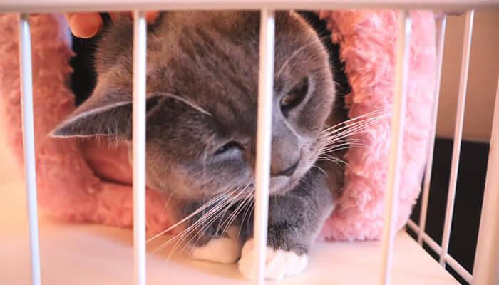 冬のドーム型ベッドで寝る猫