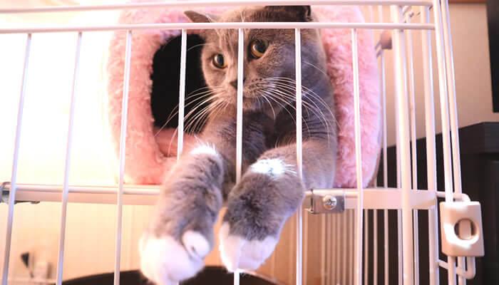 ケージの中で猫の落ち着けるスペースを作る