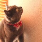 光を見てクラッキングする猫