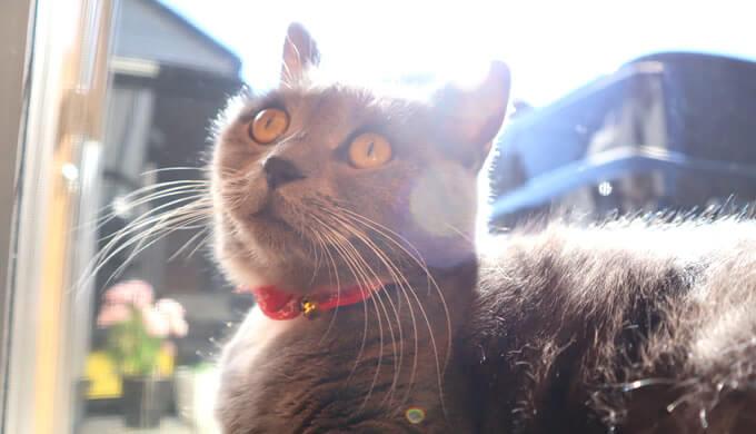 体温調節しながら日光浴する猫