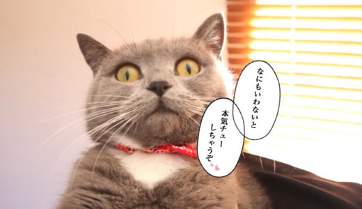 漫画『好きっていいなよ。』のセリフが似合う猫
