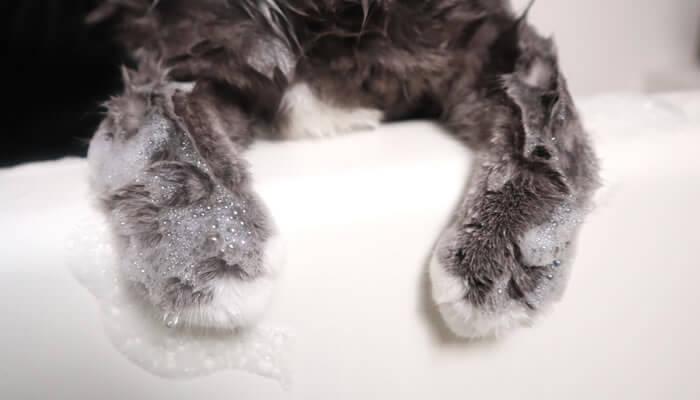 手の先までシャンプーされる猫