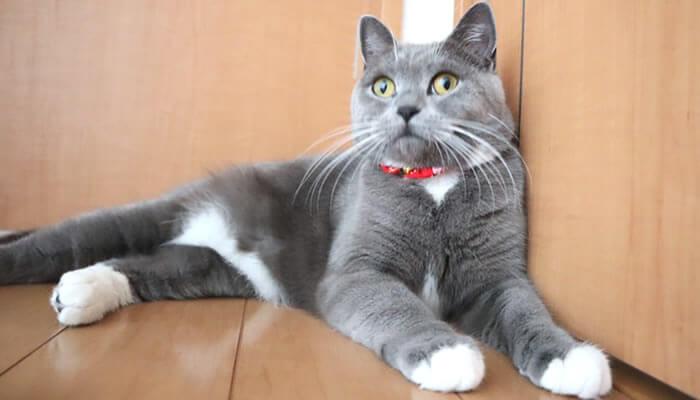 嫌な予感を察する猫