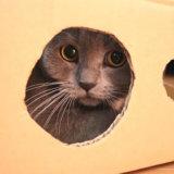ダンボールハウスを気に入る猫