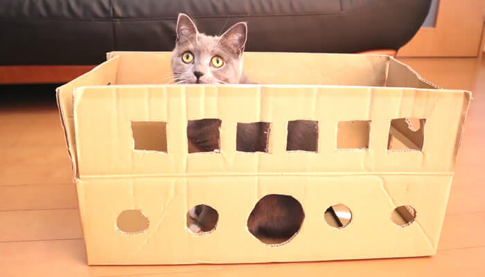 ダンボールハウスに入る猫