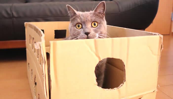 ダンボールハウスに興味を示す猫