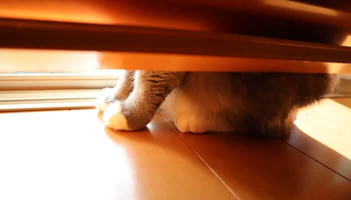 日向ぼっこする靴下猫