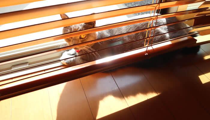 猫アレルギー対策グッズ ブラインド