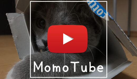 【動画】子猫の初めてシリーズ「はじめての毛布」|Momo Tube(モモチューブ)