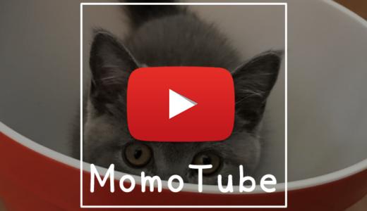 【動画】触られるのが嫌いな猫|Momo Tube(モモチューブ)