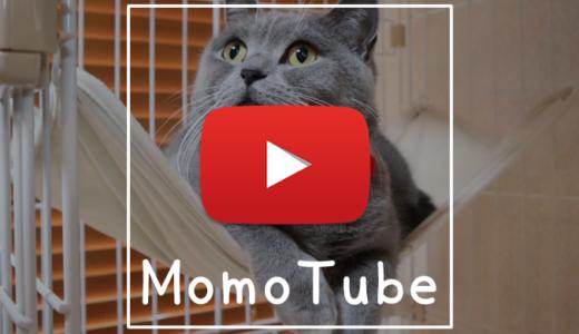 【動画】ガチャガチャカプセルで大ジャンプ|Momo Tube(モモチューブ)