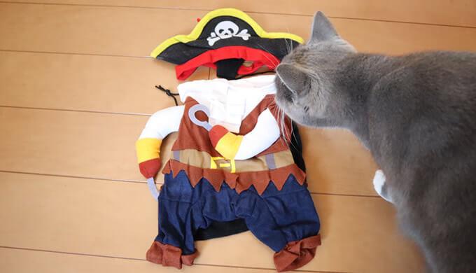 猫の海賊コスチューム