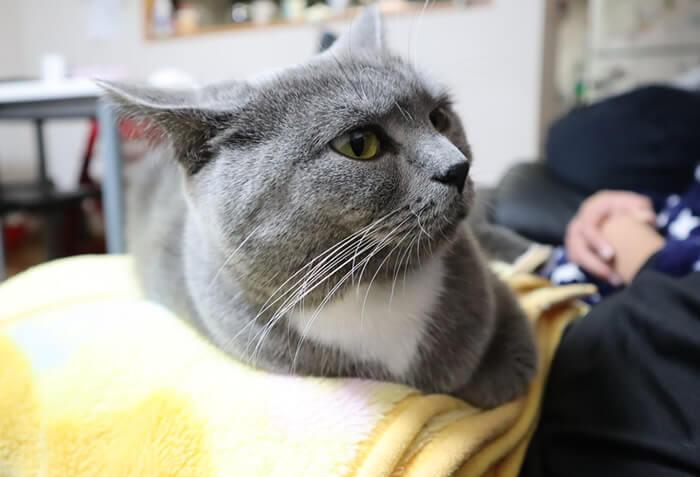猫のモモが膝の上に乗って香箱座り