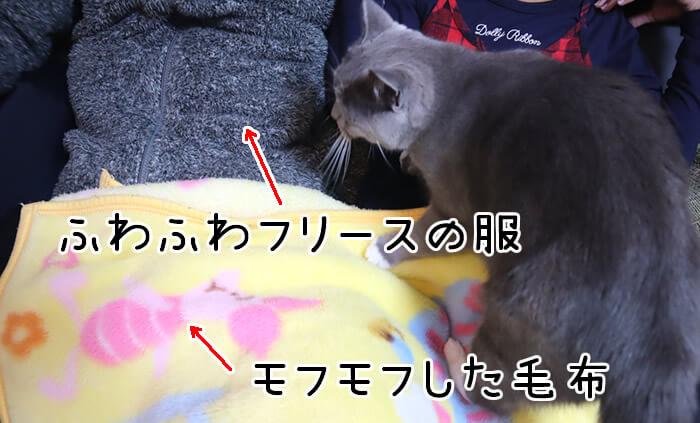 猫のモモが膝の上に乗ってきたカラクリ