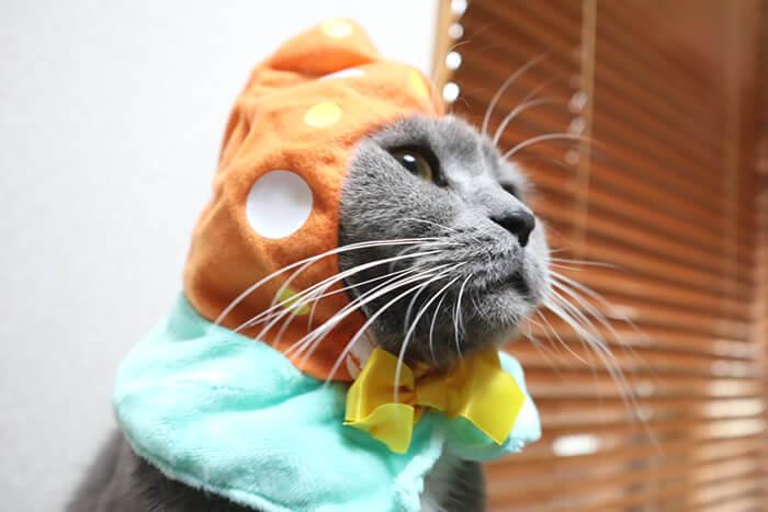 猫のかぶりものをかぶって固まるモモ