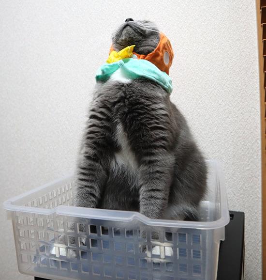 猫のかぶりものがズレてきたモモ