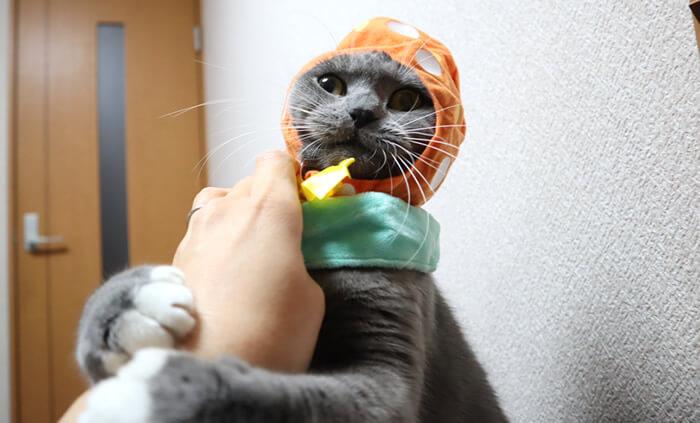 飼い主に抵抗する猫モモ