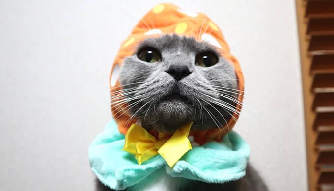 猫のかぶりものをかぶるブリティッシュショートヘアのモモ
