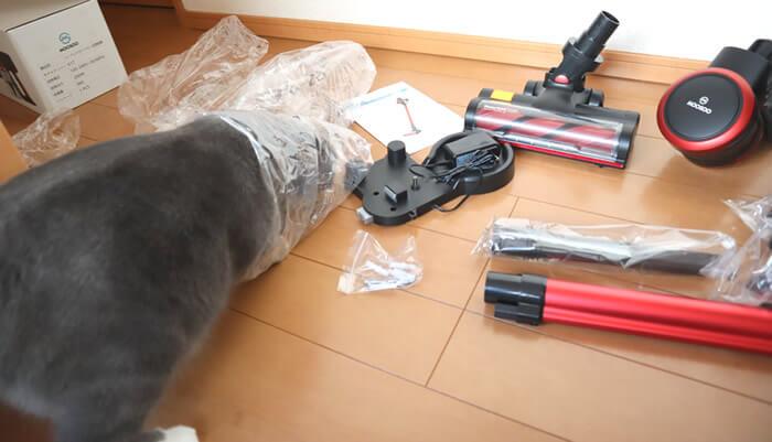 ビニール袋に入る猫のモモ