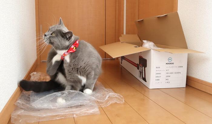 ビニール袋の上で落ち着く猫のモモ