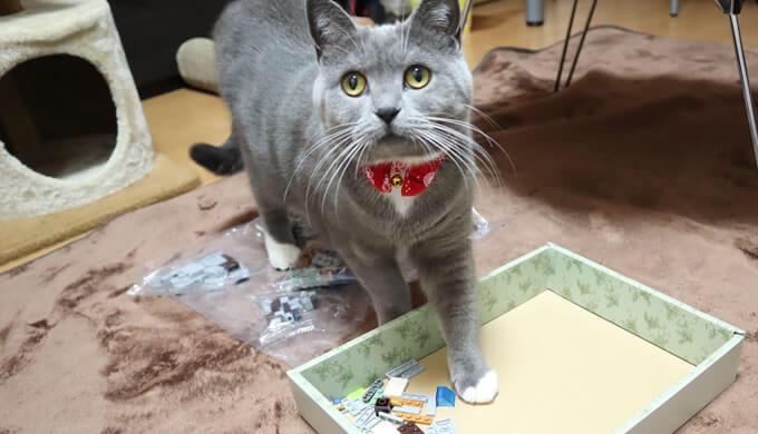 マイクラレゴと猫のモモ