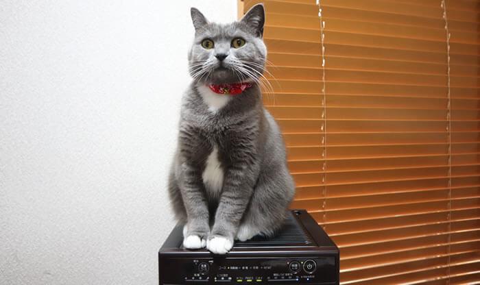 クリスマスプレゼントを眺める猫のモモ