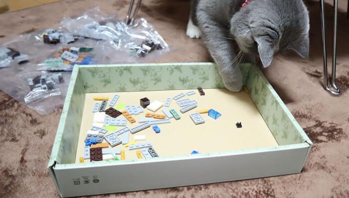 クリスマスプレゼントのレゴに興味津々の猫のモモ