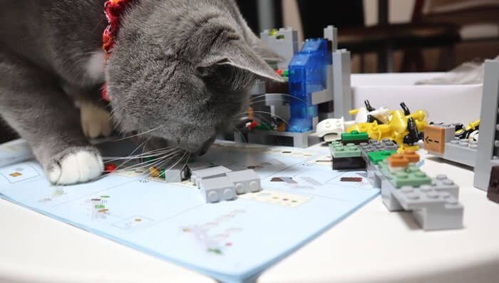 レゴの安全性を確かめる猫のモモ