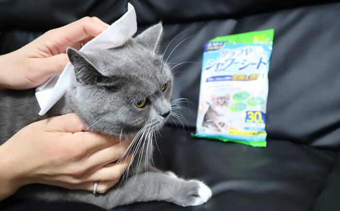 猫アレルギー対策グッズ シャンプーシートで猫を洗う