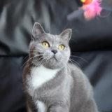 カシャぶんが大好きな猫のモモ