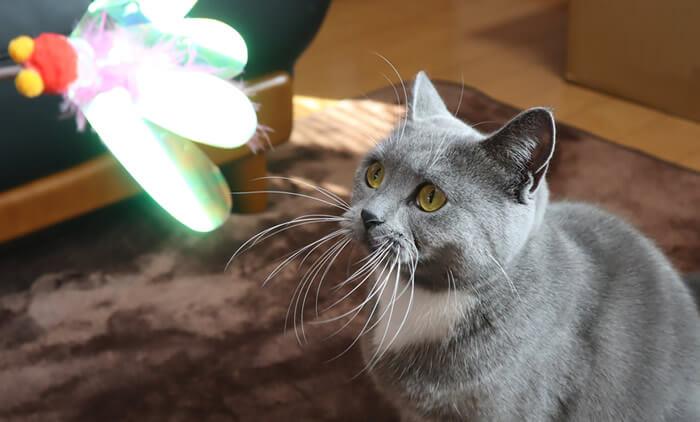 猫のカシャぶんが壊れないための工夫