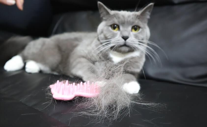 にゃわらかグルーマーで抜けた猫のモモの抜け毛