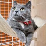 猫首輪ハゲ